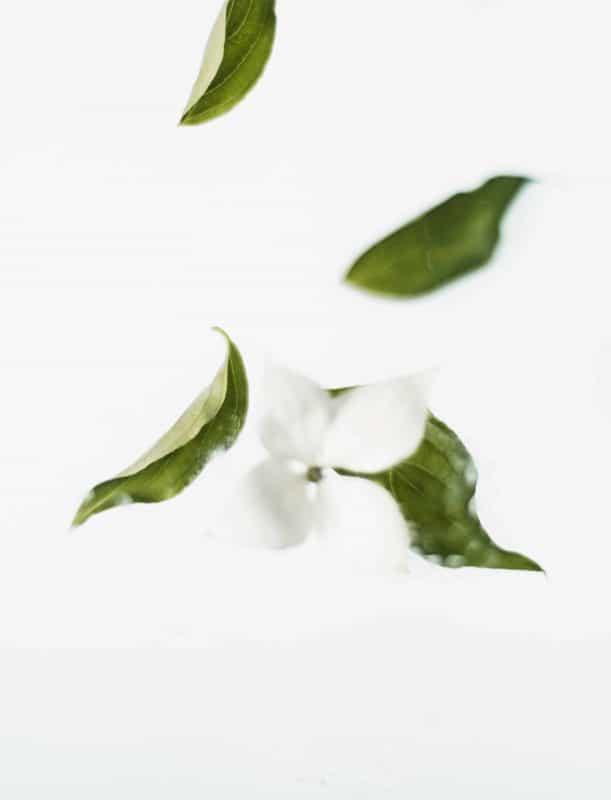 Bienfaits du thé vert