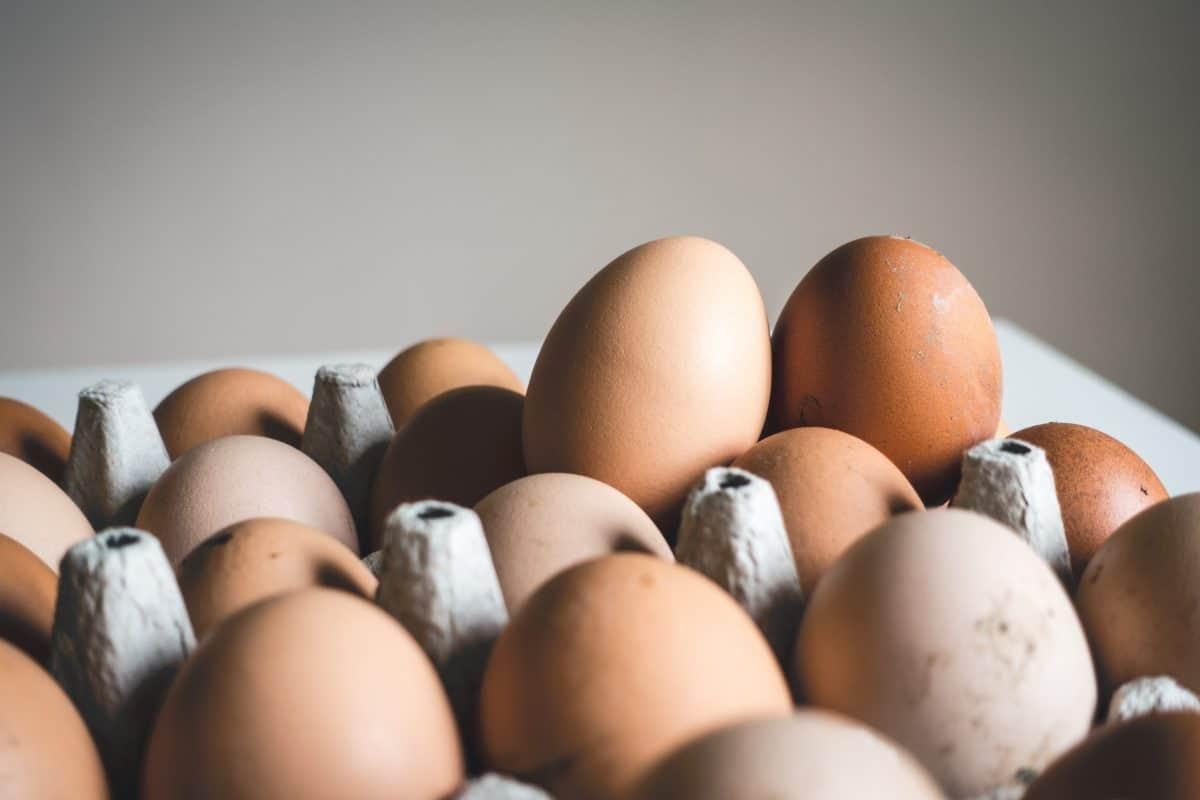 Conservation des œufs